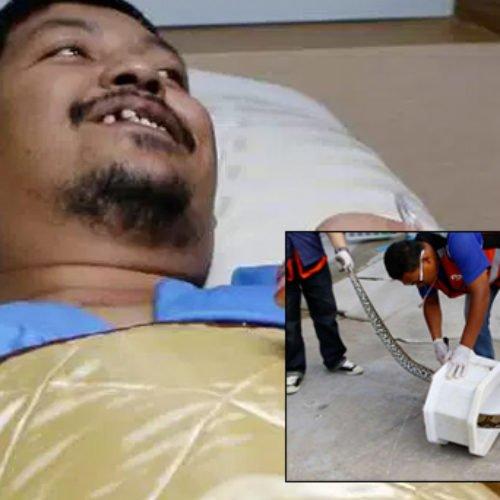 Fue atacado por una pitón que apareció por la tubería del retrete